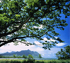 photo_tree